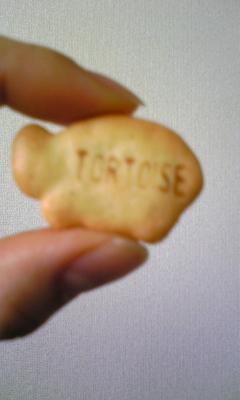090119 cookie2